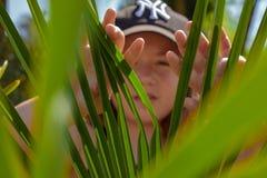 Hidding dietro le foglie verdi fotografia stock libera da diritti