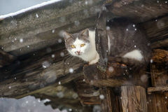 Сat hidding under the roof during strong snowfall. Stray cat hidding under the roof during strong snowfall Royalty Free Stock Photography
