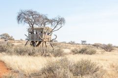 Hide in an acacia tree Royalty Free Stock Images
