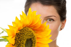 Hide behind sunflower Stock Photography