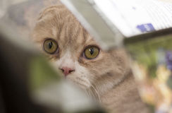 Hide. Cat looks voraciously from a shopping bag Stock Photography