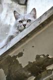 Hide cat Stock Image