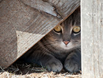 Hide a kitty. Cat hiding under wooden steps royalty free stock image