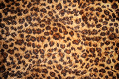 Hide of leopard pattern for background Royalty Free Stock Photos