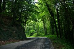 Hide road in the middle of the forest royalty free stock photography