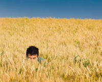 Hide and seek in wheat Royalty Free Stock Photo