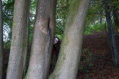 Hide and seek in the woods: a lady`s face peeping from behind a beech trunk royalty free stock photography