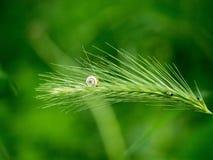 Hided в траве Стоковые Фотографии RF