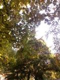 hideing od słońce threese żółtej zieleni obrazy royalty free
