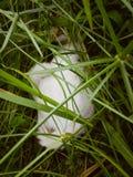 Hiden-Katze Lizenzfreie Stockbilder