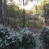 Hideout. Trailer in the woods with sunlight peeking through canopy Stock Images