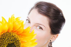 Hiding behind a sunflower Stock Images