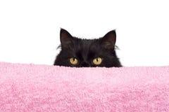 Hiding black cat. Isolates on white Stock Photos