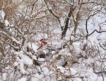 Hiding. Boy hiding among tree branches Royalty Free Stock Photos