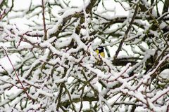 Hiding in the branches Royalty Free Stock Photo
