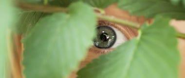 Hiding Stock Photography