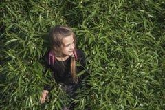 Hiding in bush stock image