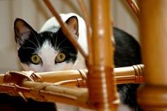 Hiding cat Royalty Free Stock Image