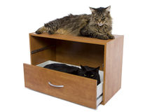 Hiding Cat. Black cat hiding in an open drawer Royalty Free Stock Photo
