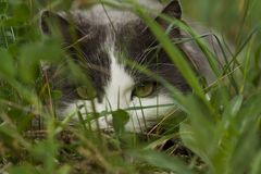 Hiding cat Royalty Free Stock Images