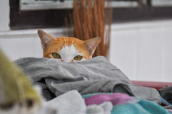 Hiding cat himself in clothes stock image