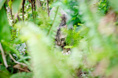 Hiding Cat. Cat hiding in little garden from people Royalty Free Stock Photography