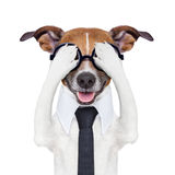 Hiding covering crazy dog. With tie and dumb glasses Stock Image