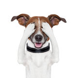 Hiding covering eye dog. Hiding covering both eyes dog Royalty Free Stock Images