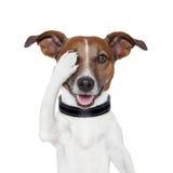 Hiding covering eye dog. Hiding covering one eye dog Stock Photography