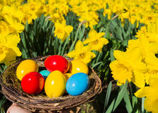 Hiding easter basket Royalty Free Stock Photography