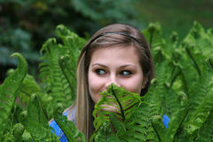 Hiding in the Ferns royalty free stock photo