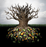 Hiding money. And secret wealth business concept as an empty tree with currency and gold hidden in the underground roots as a financial metaphor to protect Royalty Free Stock Photo