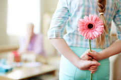 Hiding pink gerbera Royalty Free Stock Images