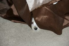 Hiding Puppy Royalty Free Stock Photos