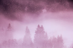 Hiding and revealing. Shadows of the forest in a misty winter morning royalty free stock images