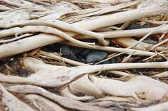 Hiding rocks. Rock and driftwood abstract composition stock images