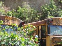Hiding school bus. Rustic old school bus hidden beneath the foliage Royalty Free Stock Images