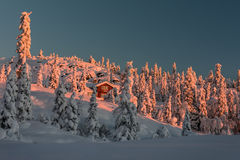 Hiding between snow. Sunrise on a snow-filled landscape near Kongsberg, Buskerud, Norway Royalty Free Stock Photo