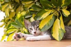 Hidng del gattino sotto un cespuglio fotografia stock