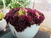 Hidroponia dos vegetais Fotos de Stock Royalty Free