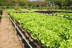 Hidroponic planting Stock Photos