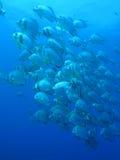 Hiebfische - tief Blau Lizenzfreie Stockfotografie