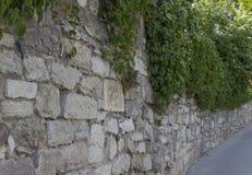 Hiedra contra la pared de piedra imagenes de archivo