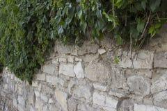 Hiedra contra la pared de piedra fotos de archivo libres de regalías