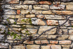 Hiedra contra la pared de piedra Foto de archivo libre de regalías