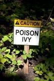 Hiedra de veneno Foto de archivo libre de regalías