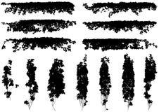 Hiedra del vector aislada en un fondo blanco Foto de archivo