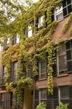Hiedra en casas en Boston Foto de archivo libre de regalías