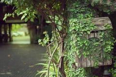 Hiedra en el buzón de madera viejo Fotografía de archivo