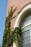 Hiedra en el edificio de la universidad imagen de archivo libre de regalías
